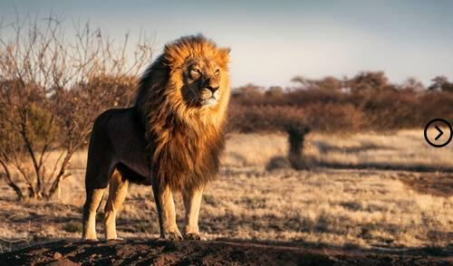 What is the national animal of South Africa? 7