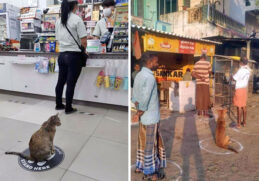 10 Photos Prove that Animals are also maintaining social distance 1