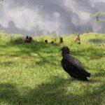 Blanchard Park, Orlando, FL Photo gallery 32