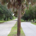 Blanchard Park, Orlando, FL Photo gallery 14