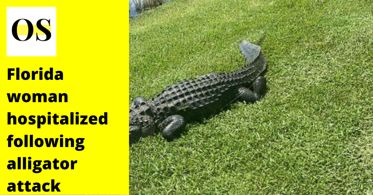 10-foot alligator attacked Florida woman while trimming trees 3