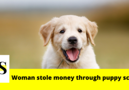 Woman in Flagler Beach stole thousands from residents through puppy scheme 3