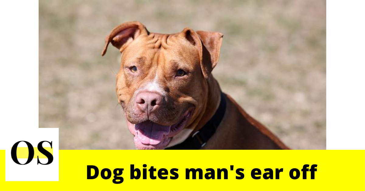 Pit Bull bites man's ear off in Volusia County