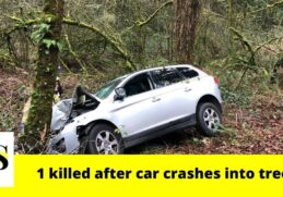 27-year-old man dies after car crashes into tree near Lucas Road and Date Avenue 1