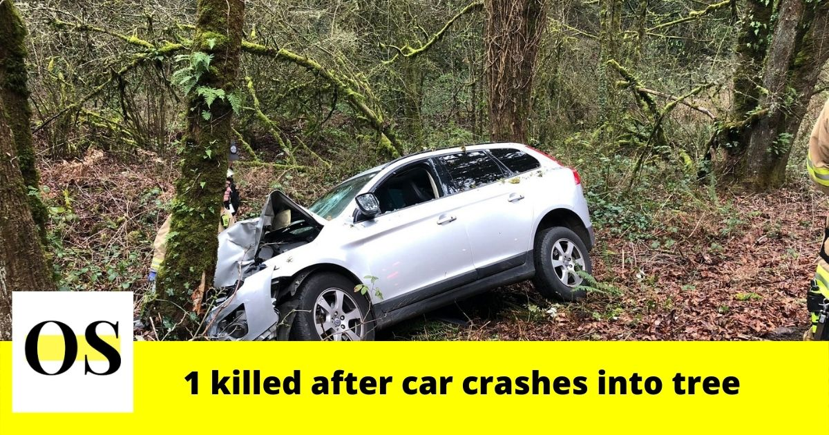 27-year-old man dies after car crashes into tree near Lucas Road and Date Avenue 2