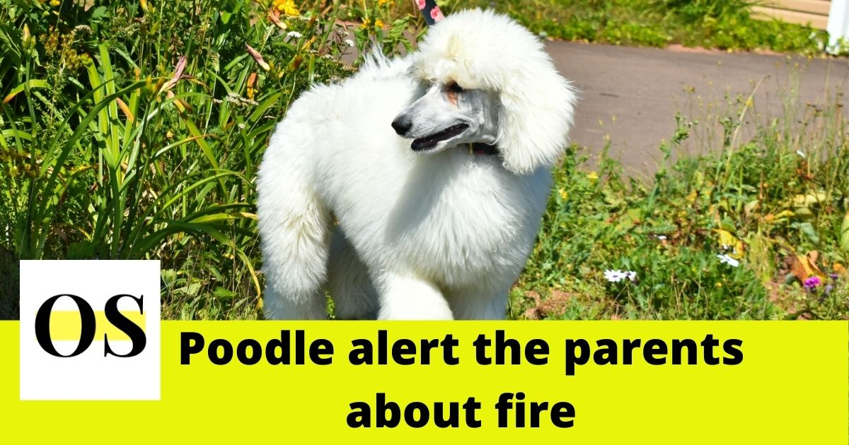 One-year-old Poodle alert the family of a house fire in Florida. 3