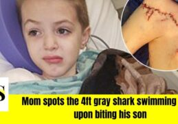 9 year old bitten by a shark on his shoulder