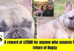Man in Orlando robbed of his French bulldog