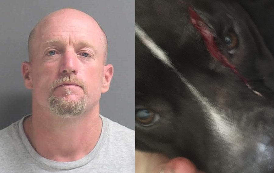 34-year-old man attacks a dog with machete in New Smyrna Beach. 1