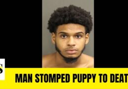 Orlando man, Juan Felix accused of stomping puppy to death